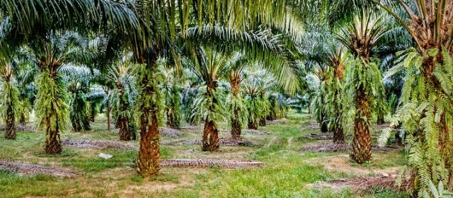 Azmin: ECRL won't impact palm oil export to China